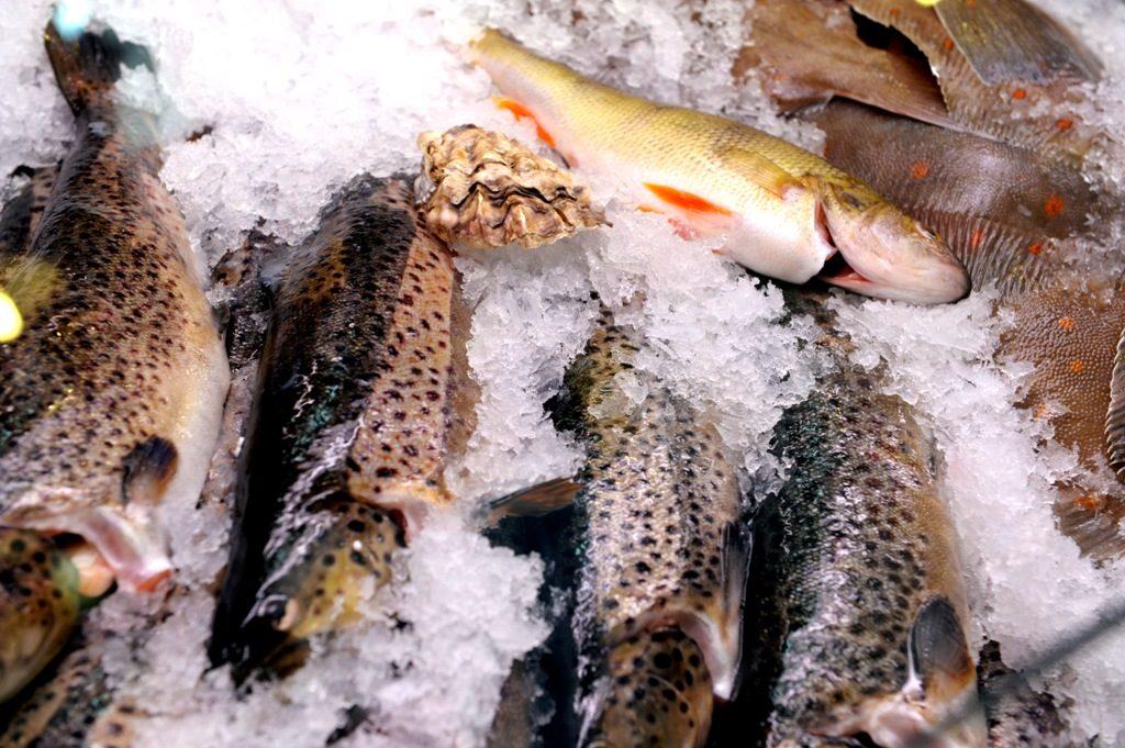 Svensk fisk